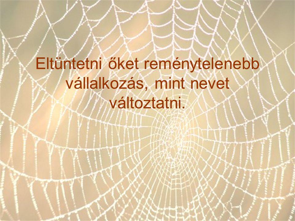 A pók hálójában vagyunk Tetszik, nem tetszik,ez tény.