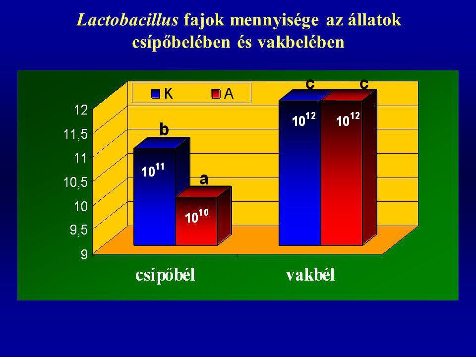 Lactobacillus fajok mennyisége az állatok csípőbelében és vakbelében