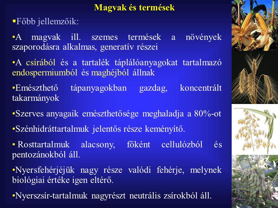  Olajos magvak Elsősorban az olajipar számára termesztett növények Olajtartalmuk jelentős, 30-40% Fehérje-tartalmuk 15-22%, lizinben szegény, metioninban a hüvelyesekénél gazdagabb Olajtartalmuk ellenére MFN –tartalmuk az MFE 1,5-2 szereseTakarmány Nyersfehérje, % Nyerszsír, % Napraforgó13-1825-32 Repce18-2538-43 Len20-2430-35 Kender20-2235-38 Tök27-3038-40