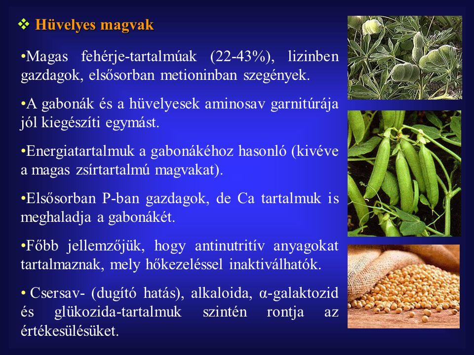  Hüvelyes magvak Magas fehérje-tartalmúak (22-43%), lizinben gazdagok, elsősorban metioninban szegények.
