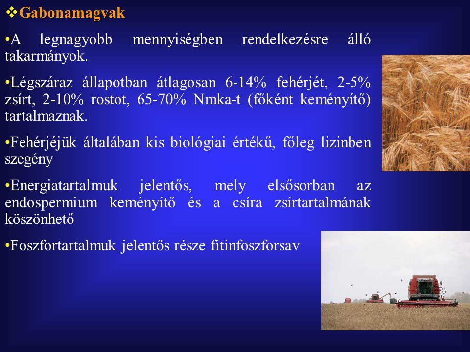  Cirokmag  Energiatartalma a kukoricáénál kisebb.