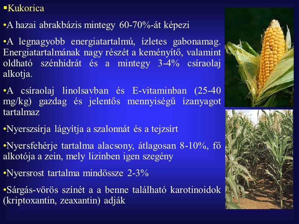  Kukorica A hazai abrakbázis mintegy 60-70%-át képezi A legnagyobb energiatartalmú, ízletes gabonamag.