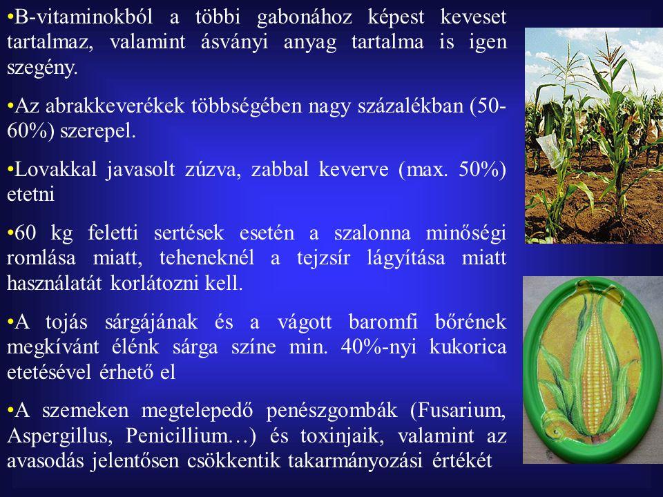  Árpa Takarmányozásra elsősorban az őszi vetésű (4 és 6 soros) árpa használható Kitűnő ízű és étrendi hatású takarmány, különösen sertések számára Nyersfehérje tartalma 11-12%, a kukoricáénál nagyobb biológiai értékű Nyersrost tartalma előnyös struktúrájú, kb.