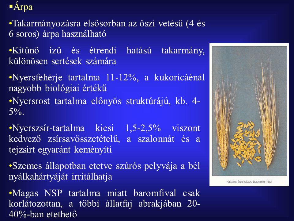  Édes csillagfürt Sárga és fehérvirágú változata alkalmas takarmányozásra Mészben szegény, homokos talajon is termeszthető Nyersfehérje-tartalma 34-42%, a borsónál metioninban gazdagabb Rosttartalma 13% körüli Termesztése fellendülőben van Gondot okoz a mag alkaloida tartalma (lupinin, lupinidin) 15% körüli mennyiségben szinte valamennyi állat abrakkeverékében szerepelhet Etetésének hatására juhoknál növekedhet az ikerellések gyakorisága