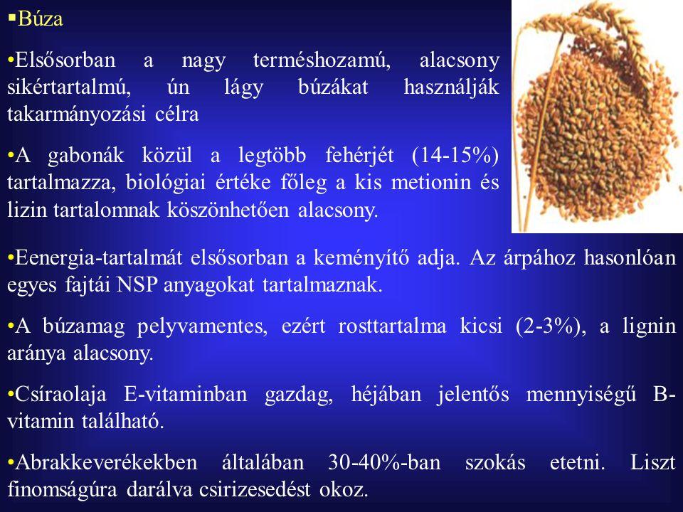  Lóbab Neve ellenére nem bab (phaseolus), hanem vicia faj A lóbab is tartalmaz antinutritív anyagokat (vicin, kovicin, tannin), ezek arány azonban a nemesítés hatására minimálisra csökkent Legtöbbször előkészítés nélkül is etethető, javasolt mennyisége abrakkeverékekben 15-20%-ban Takarmányértéke a borsóéhoz hasonlít, metionin tartalma alacsony A modern, nemesített fajták termésátlaga eléri a 2-3 tonnát