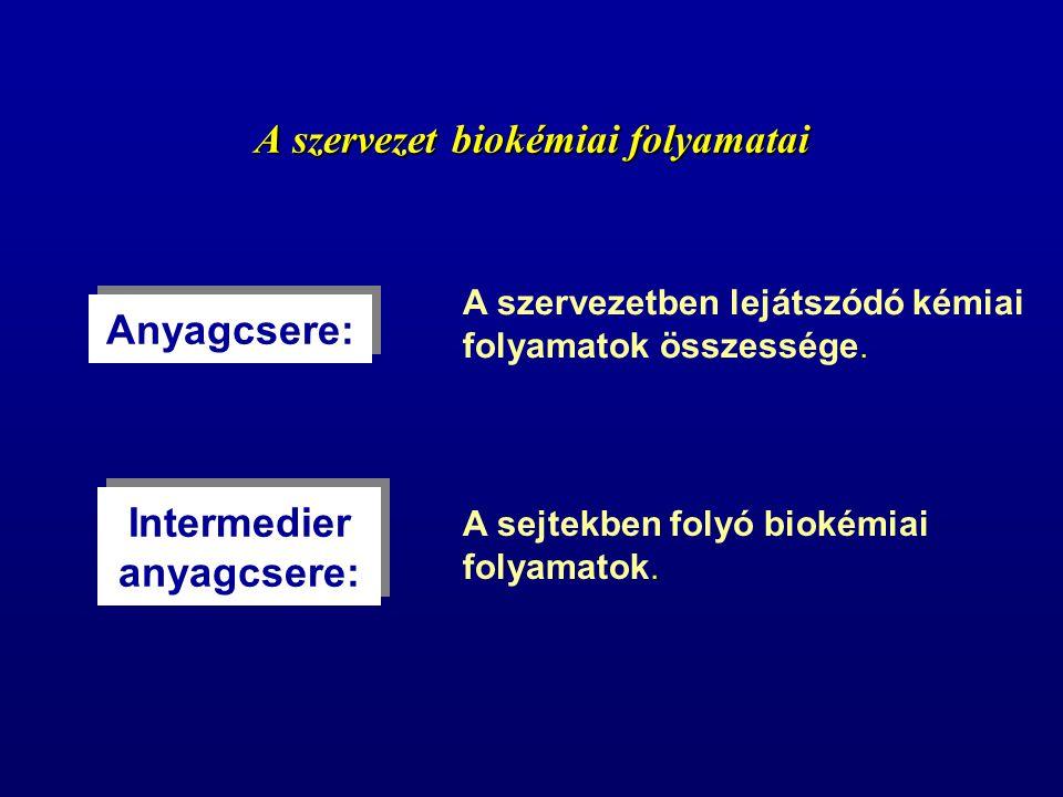 A szervezet biokémiai folyamatai Anyagcsere: A szervezetben lejátszódó kémiai folyamatok összessége. Intermedier anyagcsere: A sejtekben folyó biokémi
