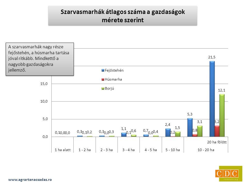 www.agrartanacsadas.ro Szarvasmarhák átlagos száma a gazdaságok mérete szerint A szarvasmarhák nagy része fejőstehén, a húsmarha tartása jóval ritkább.