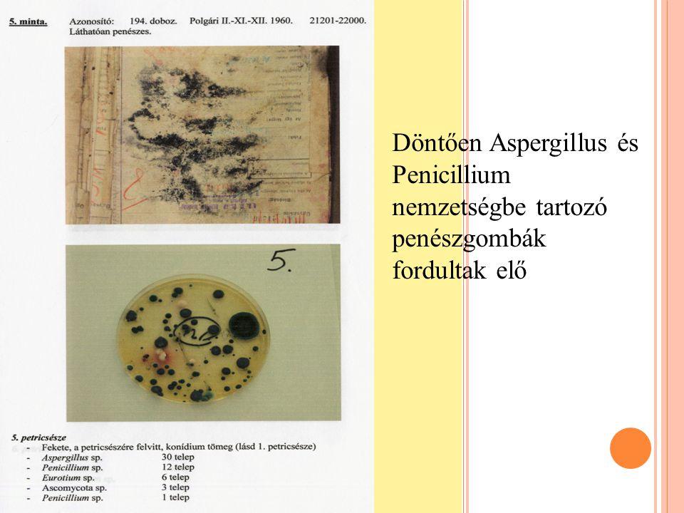 Döntően Aspergillus és Penicillium nemzetségbe tartozó penészgombák fordultak elő