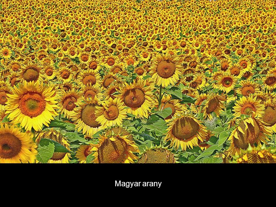 Magyar arany