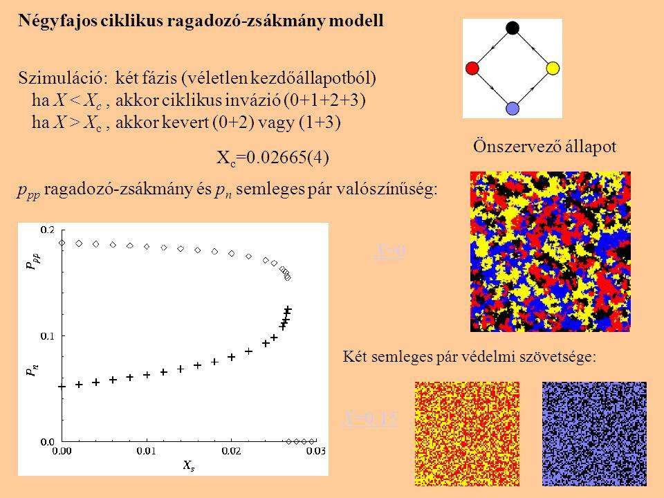 Négyfajos ciklikus ragadozó-zsákmány modell Szimuláció: két fázis (véletlen kezdőállapotból) ha X < X c, akkor ciklikus invázió (0+1+2+3) ha X > X c, akkor kevert (0+2) vagy (1+3) X c =0.02665(4) p pp ragadozó-zsákmány és p n semleges pár valószínűség: Két semleges pár védelmi szövetsége: Önszervező állapot X=0 X=0.15
