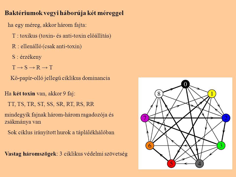 Baktériumok vegyi háborúja két méreggel ha egy méreg, akkor három fajta: T : toxikus (toxin- és anti-toxin előállítás) R : ellenálló (csak anti-toxin) S : érzékeny T → S → R → T Kő-papír-olló jellegű ciklikus dominancia Ha két toxin van, akkor 9 faj: TT, TS, TR, ST, SS, SR, RT, RS, RR mindegyik fajnak három-három ragadozója és zsákmánya van Sok ciklus irányított hurok a táplálékhálóban Vastag háromszögek: 3 ciklikus védelmi szövetség