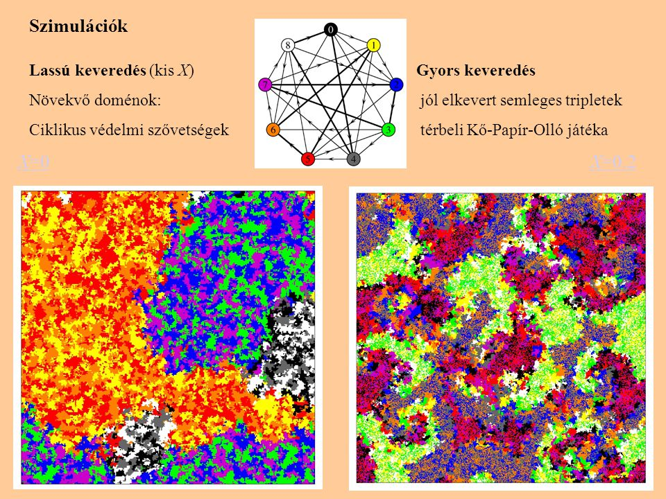 X=0 Szimulációk Lassú keveredés (kis X) Gyors keveredés Növekvő doménok: jól elkevert semleges tripletek Ciklikus védelmi szővetségek térbeli Kő-Papír-Olló játéka X=0.2