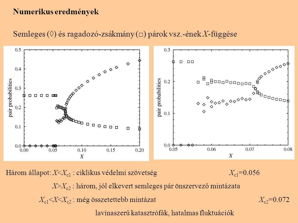 Numerikus eredmények Semleges (◊) és ragadozó-zsákmány (□) párok vsz.-ének X-függése Három állapot: X<X c1 : ciklikus védelmi szövetség X c1 =0.056 X>X c2 : három, jól elkevert semleges pár önszervező mintázata X c1 <X<X c2 : még összetettebb mintázat X c2 =0.072 lavinaszerű katasztrófák, hatalmas fluktuációk