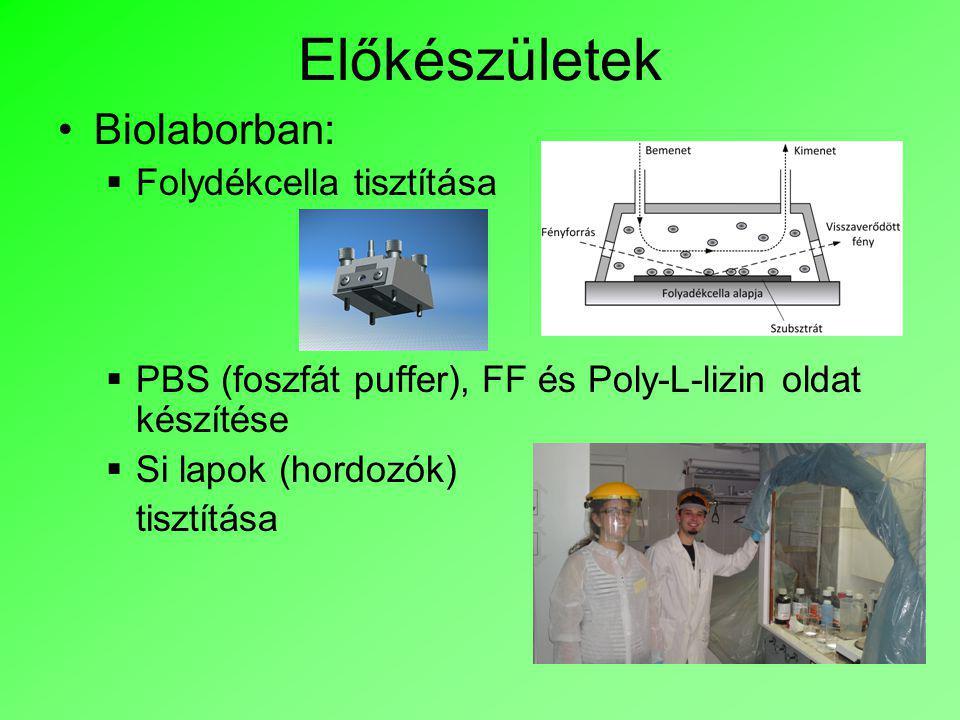 Előkészületek Biolaborban:  Folydékcella tisztítása  PBS (foszfát puffer), FF és Poly-L-lizin oldat készítése  Si lapok (hordozók) tisztítása