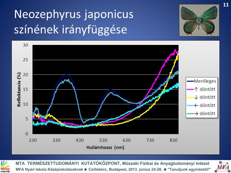 Neozephyrus japonicus színének irányfüggése 11