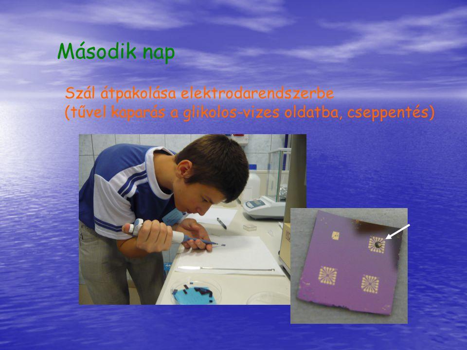 Második nap Szál átpakolása elektrodarendszerbe (tűvel kaparás a glikolos-vizes oldatba, cseppentés)