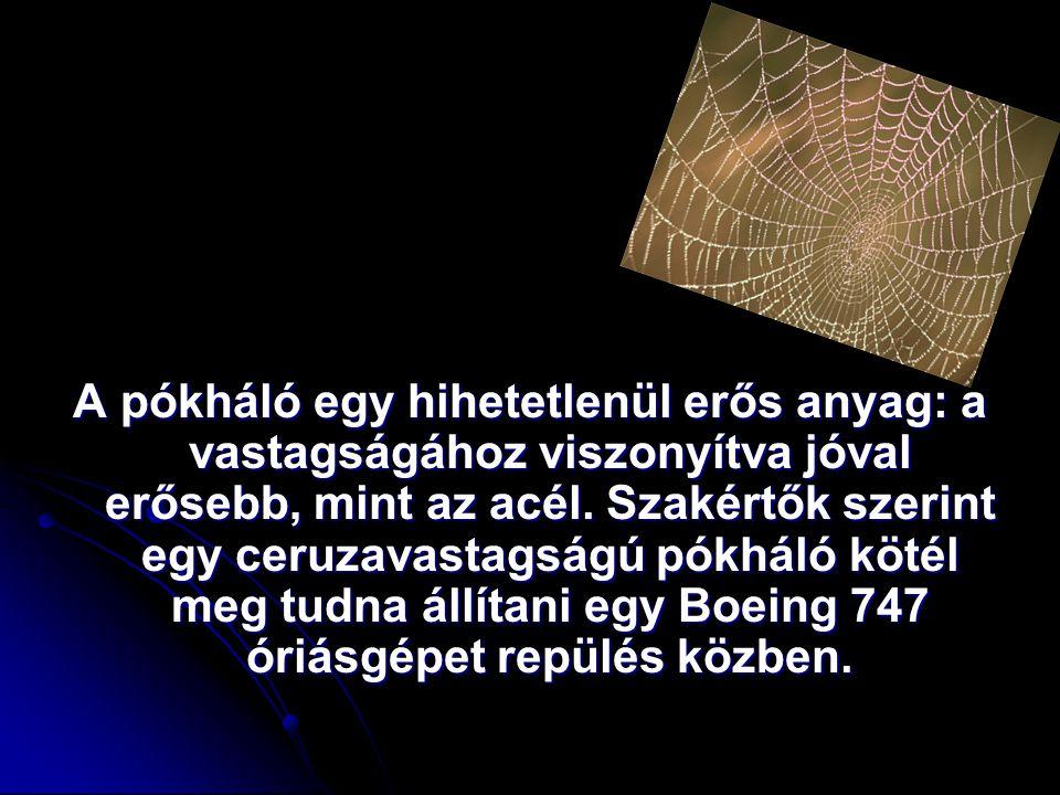 A pókháló egy hihetetlenül erős anyag: a vastagságához viszonyítva jóval erősebb, mint az acél. Szakértők szerint egy ceruzavastagságú pókháló kötél m