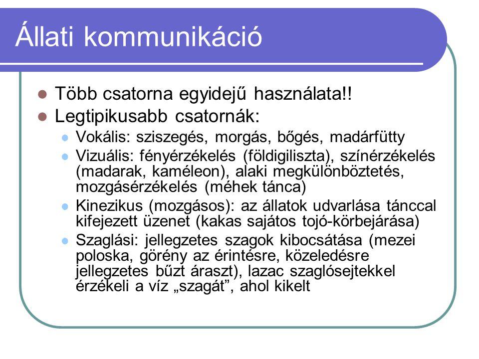 Állati kommunikáció Több csatorna egyidejű használata!.