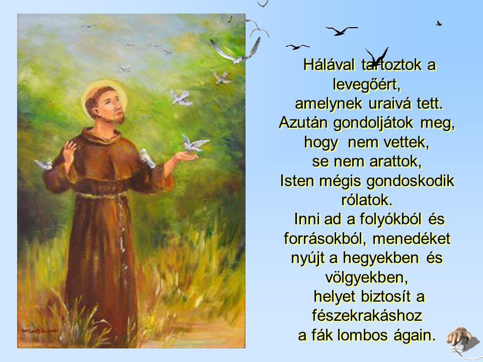 Amikor Szent Ferenc közöttük sétált, s csuhájával megérintette a madarakat, akkor sem repült el egyik sem.