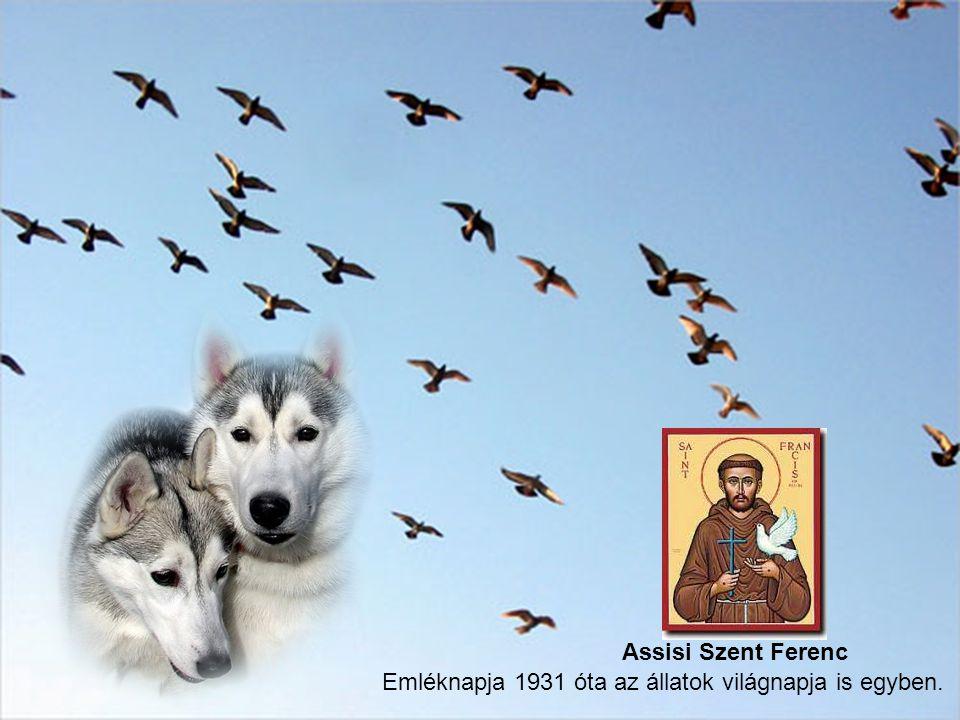 A madarak-, mozdulataikkal és énekükkel adták jelét, hogy gyönyörűségük telik a szent szavaiban.