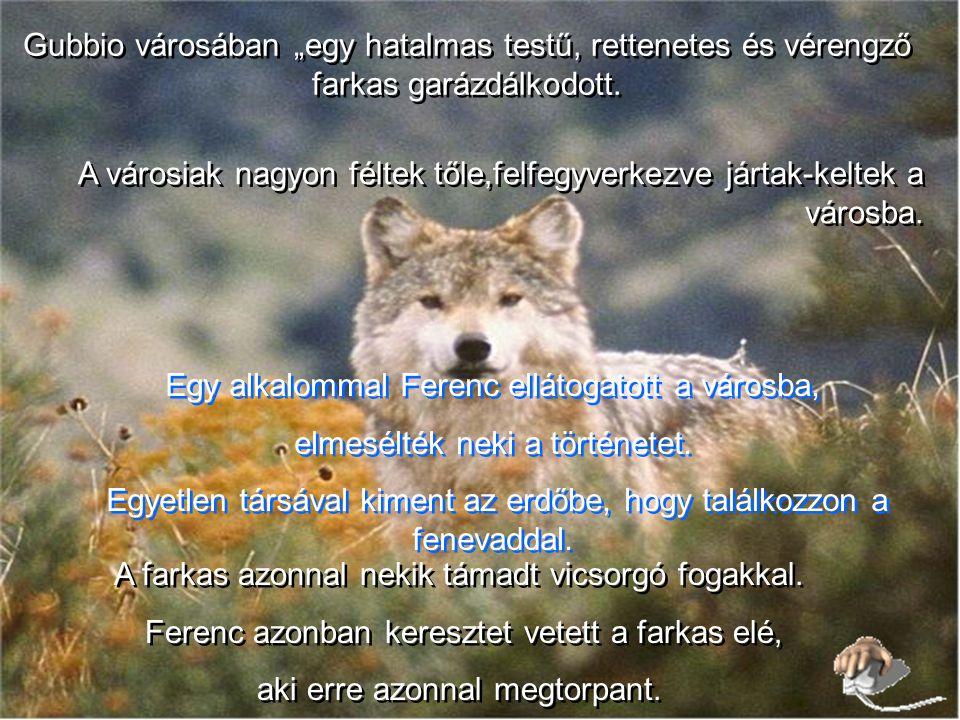 Sok történetet jegyeztek fel a kortársak a szent és az állatok viszonyáról. !