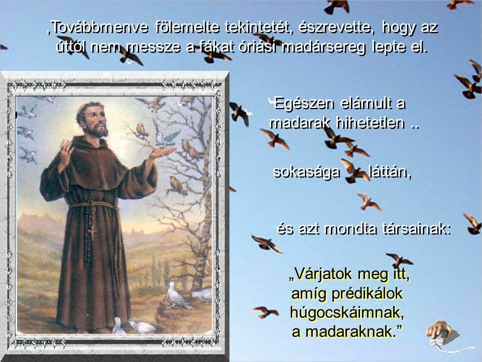 Ferenc Cannarióban prédikálni kezdett a népnek, de előbb megparancsolta a fecskéknek, hogy hallgassanak, míg el nem mondja beszédét.