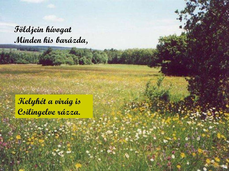 Földjein hívogat Minden kis barázda, Kelyhét a virág is Csilingelve rázza.