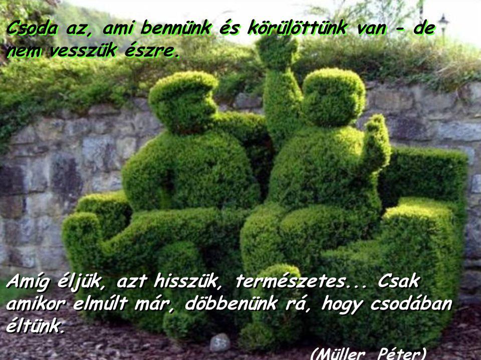 Az élet legmagasabb rendű formája a művészet, mert a művészet a legnagyobb, a legmagasabb rendű életszeretet. (Karel Schulz) Az élet legmagasabb rendű