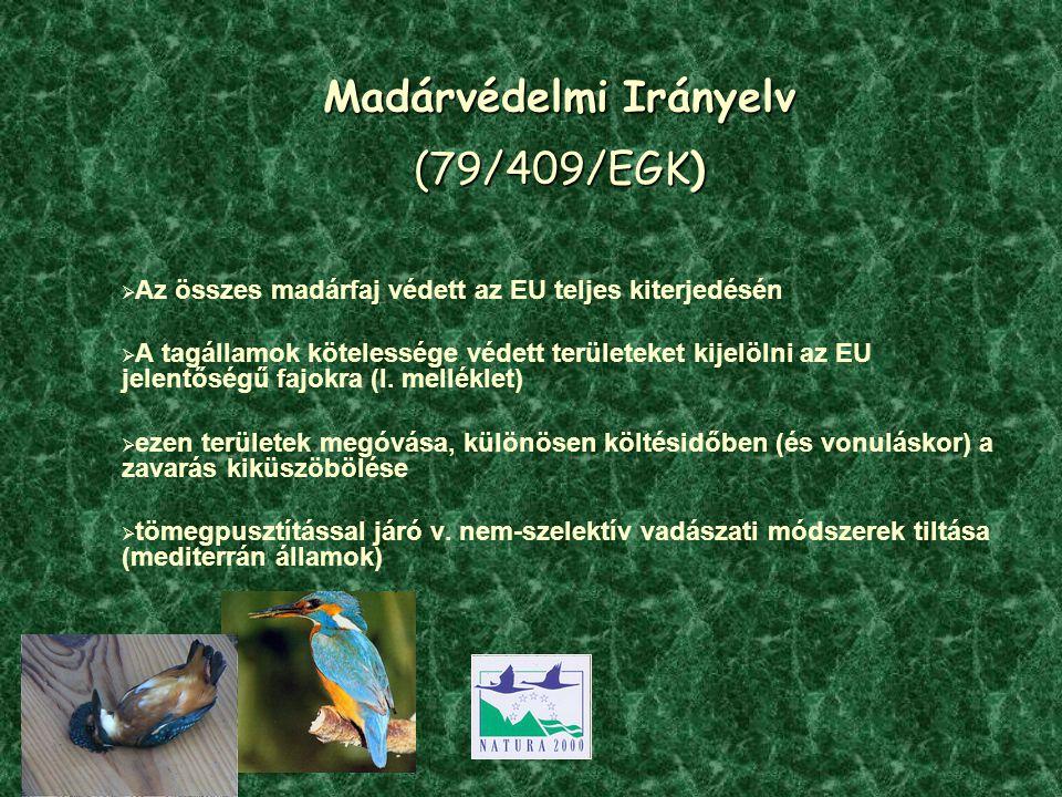 Madárvédelmi Irányelv (79/409/EGK)  Az összes madárfaj védett az EU teljes kiterjedésén  A tagállamok kötelessége védett területeket kijelölni az EU jelentőségű fajokra (I.