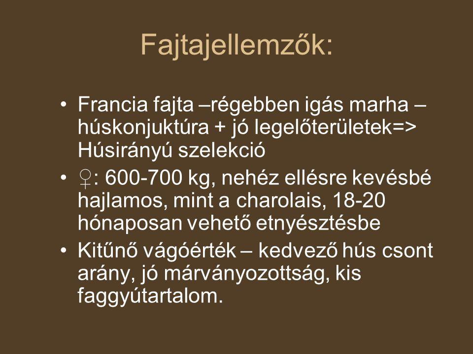 Fajtajellemzők: Francia fajta –régebben igás marha – húskonjuktúra + jó legelőterületek=> Húsirányú szelekció ♀: 600-700 kg, nehéz ellésre kevésbé haj