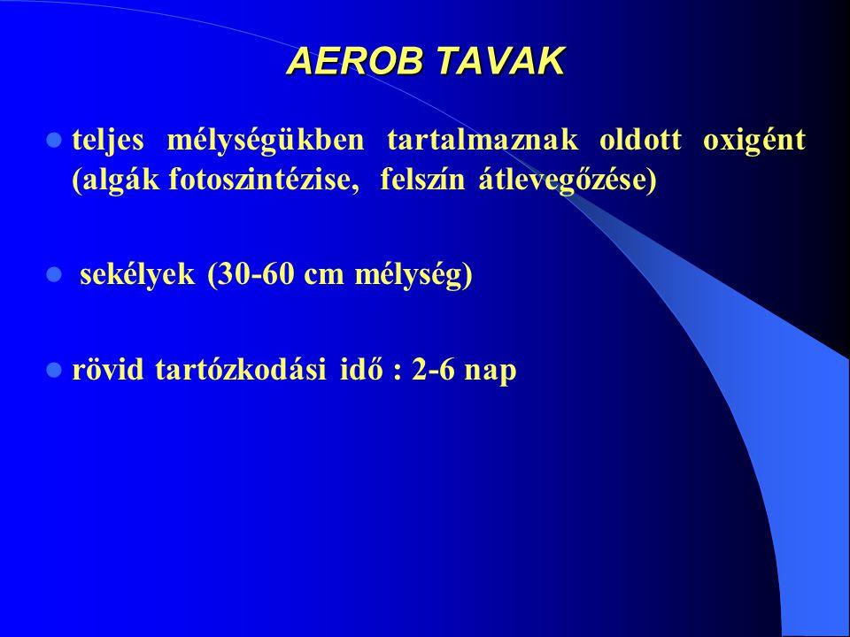 AEROB TAVAK teljes mélységükben tartalmaznak oldott oxigént (algák fotoszintézise, felszín átlevegőzése) sekélyek (30-60 cm mélység) rövid tartózkodási idő : 2-6 nap