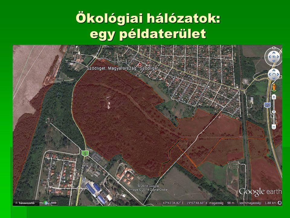 Természetvédelmi tervezés  Környezeti és előzetes hatástanulmányok természet- és tájvédelmi fejezete  Natura 2000 hatásbecslési dokumentáció  Természetvédelmi kezelési terv  Rendezési tervek természetvédelmi fejezete