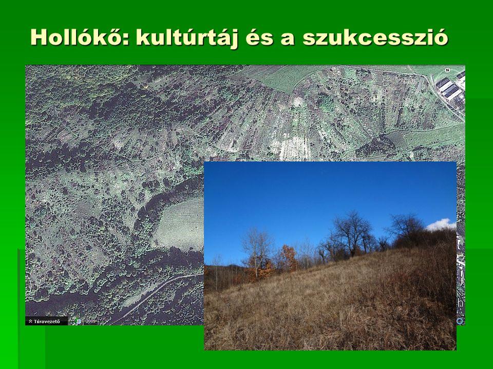 Natura 2000 hatásbecslés  Célja: Adott beruházás hatásainak bemutatása egy vagy több Natura 2000 terület élőhelyeire, fajaira vonatkozóan  A Környezetvédelmi Felügyelőség határozatban szólítja fel a beruházót az elkészítésére, elkészíttetésére  A beruházó által felkért tervező készíti el megadott szempontok alapján:  Jogszabály adja meg tartalmi és formai követelményeit  A szakértő felé való elvárásokat  Főbb tartalmi részei:  A Natura 2000 terület általános bemutatása (hol van, élőhelyei, fajai)  Élőhelyek és fajok bemutatása általában és  a beruházással összefüggésben (hatások elemzése, mértékük becslése)  Károk csökkentésének lehetőségeit és  a kompenzációt is vizsgálni kell
