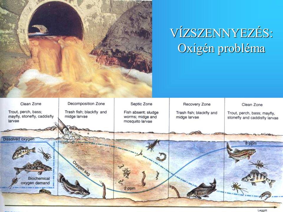 VÍZSZENNYEZÉS: Oxigén probléma