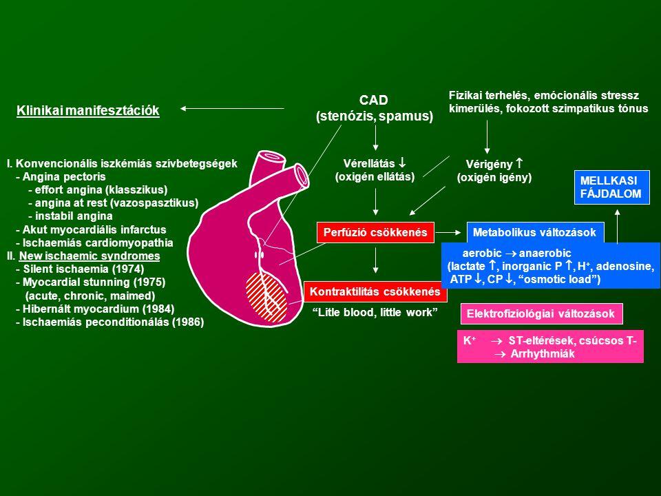 CAD (stenózis, spamus) Vérellátás  (oxigén ellátás) Perfúzió csökkenés Litle blood, little work Kontraktilitás csökkenés Metabolikus változások aerobic  anaerobic (lactate , inorganic P , H +, adenosine, ATP , CP , osmotic load ) MELLKASI FÁJDALOM Fizikai terhelés, emócionális stressz kimerülés, fokozott szimpatikus tónus Vérigény  (oxigén igény) Elektrofiziológiai változások K +  ST-eltérések, csúcsos T-  Arrhythmiák Klinikai manifesztációk I.