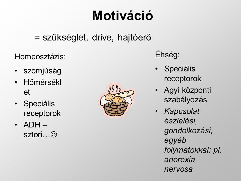 Motiváció = szükséglet, drive, hajtóerő Homeosztázis: szomjúság Hőmérsékl et Speciális receptorok ADH – sztori… Éhség: Speciális receptorok Agyi közpo