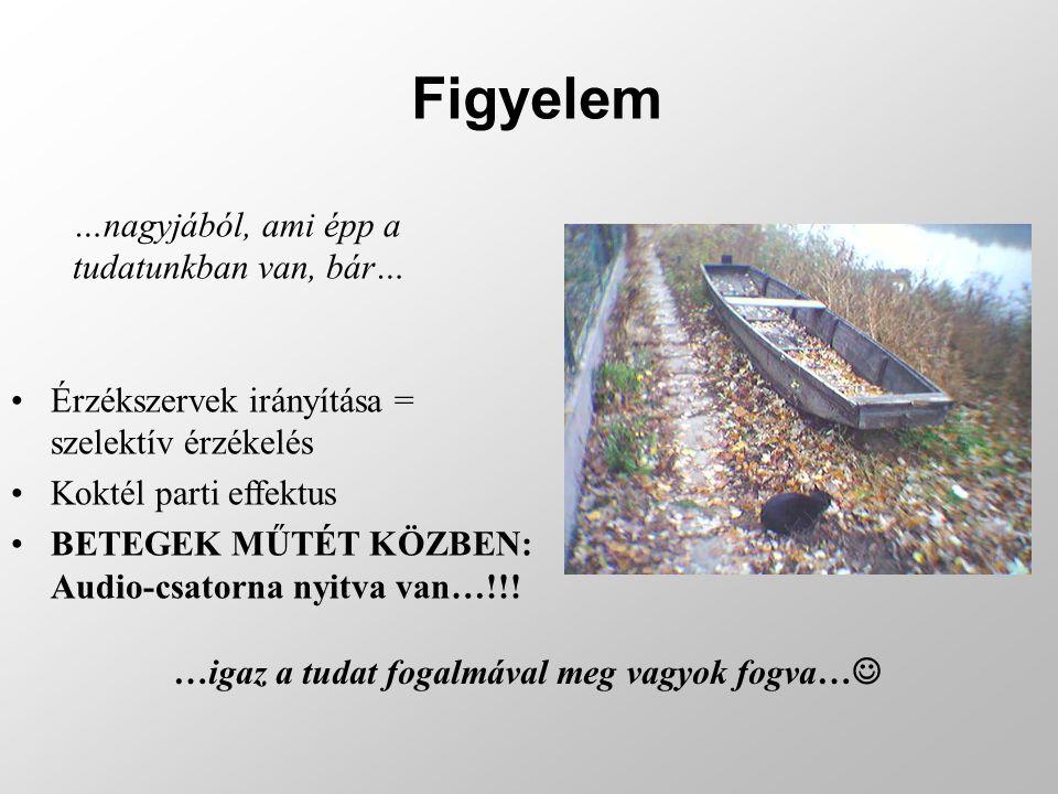 Csukják be a szemüket és idézzék fel a magyar szóbeli érettségi vizsgájukat