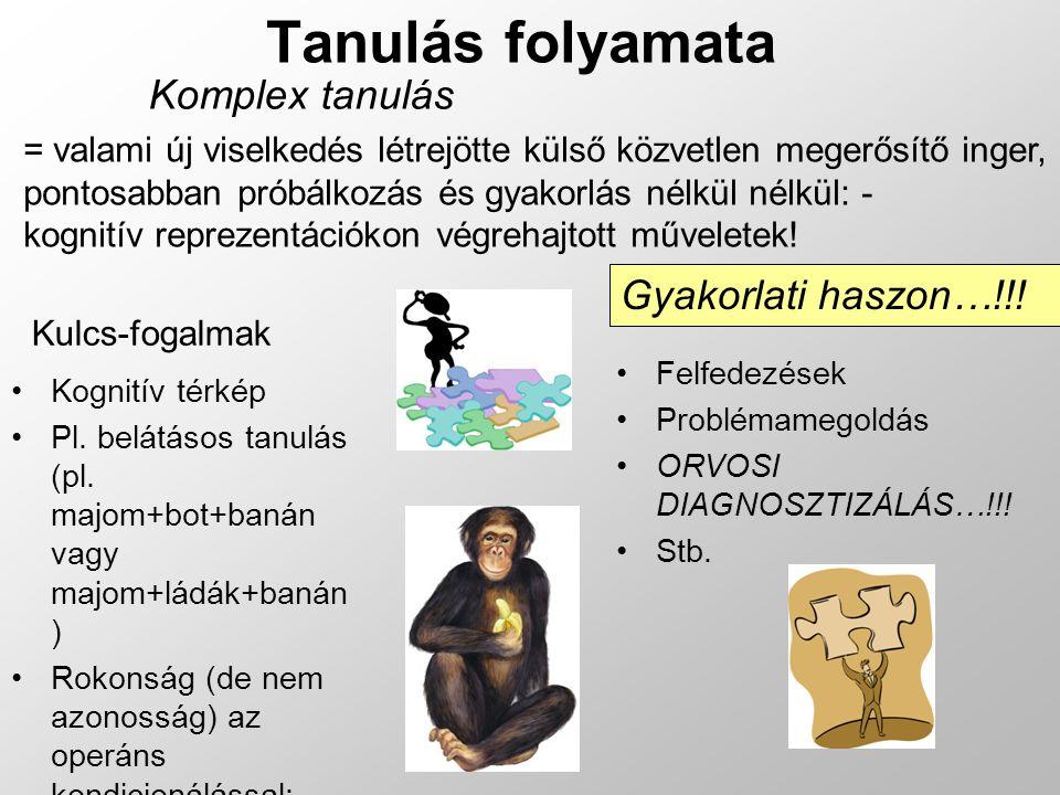 Tanulás folyamata Komplex tanulás Kognitív térkép Pl. belátásos tanulás (pl. majom+bot+banán vagy majom+ládák+banán ) Rokonság (de nem azonosság) az o