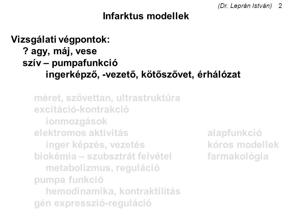 (Dr. Leprán István)2 Infarktus modellek Vizsgálati végpontok: ? agy, máj, vese szív – pumpafunkció ingerképző, -vezető, kötőszővet, érhálózat méret, s