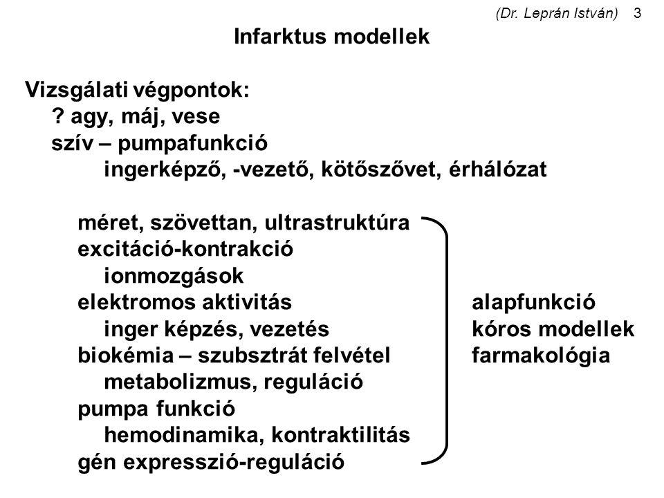 (Dr. Leprán István)3 Infarktus modellek Vizsgálati végpontok: ? agy, máj, vese szív – pumpafunkció ingerképző, -vezető, kötőszővet, érhálózat méret, s