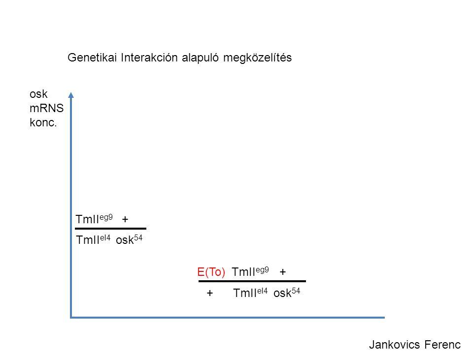 osk mRNS konc. TmII eg9 + TmII el4 osk 54 E(To) TmII eg9 + + TmII el4 osk 54 Jankovics Ferenc Genetikai Interakción alapuló megközelítés