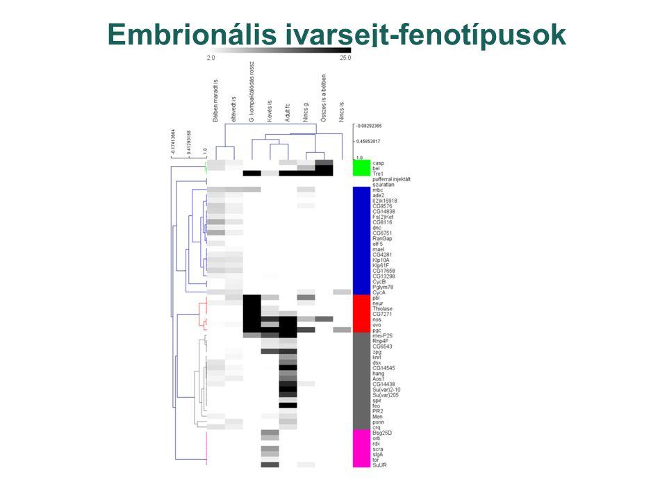 Embrionális ivarsejt-fenotípusok