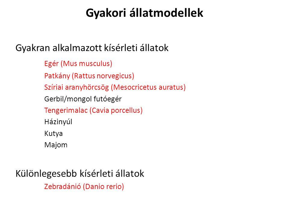 Szíriai aranyhörcsög betegségei Kalciumhiány, emésztőrendszeri zavar, baktérium fertőzések (pl.