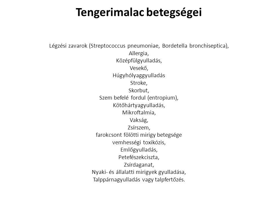 Tengerimalac betegségei Légzési zavarok (Streptococcus pneumoniae, Bordetella bronchiseptica), Allergia, Középfülgyulladás, Vesekő, Húgyhólyaggyulladá