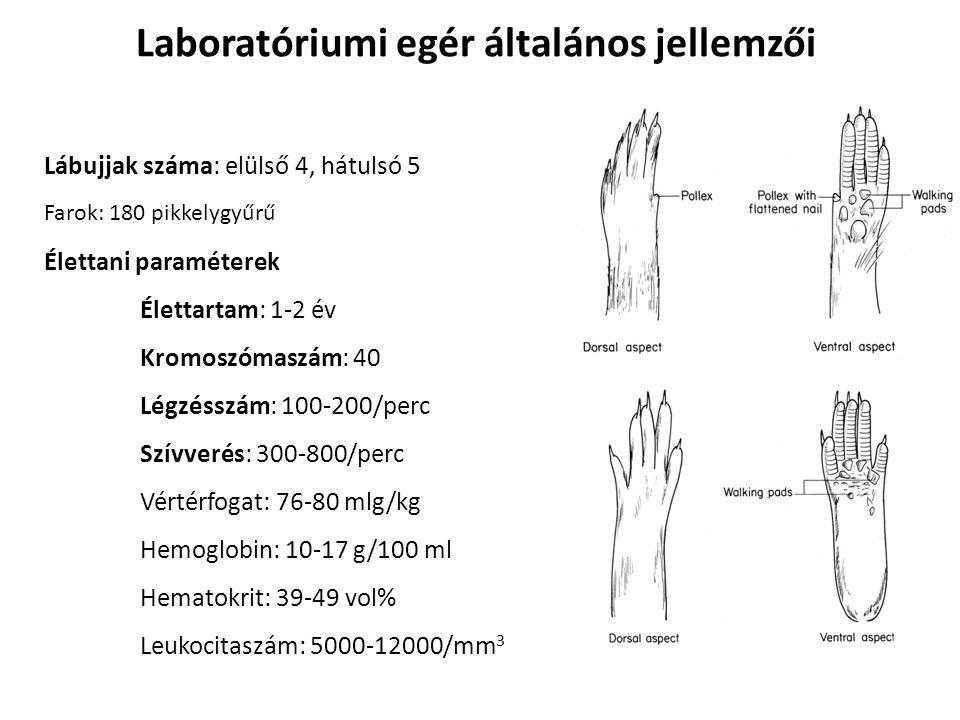 Laboratóriumi patkány általános jellemzői Élettani paraméterek Élettartamuk: 3-4 év Légzésszám: 70-110/perc Szívverés: 300-500/perc Vértérfogat: 60 mlg/kg Hemoglobin: 14-20 g/100 ml Hematokrit: 36-48 vol% Leukocitaszám: 6000-17000/mm 3 Kromoszómaszám: 42 Farok: 200-220 pikkelygyűrű