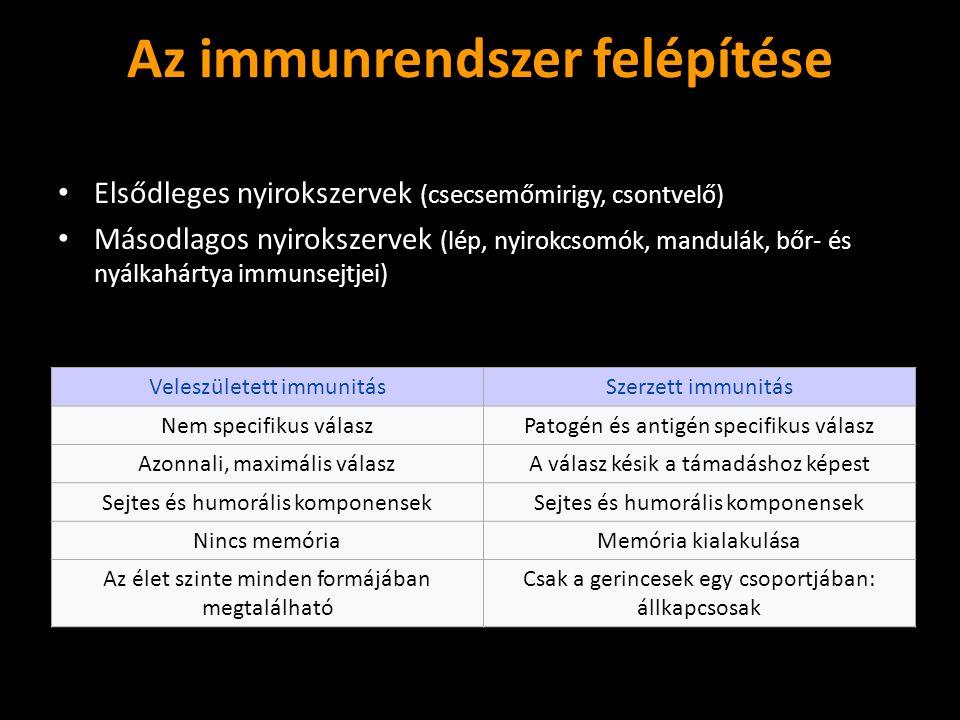 Az immunrendszer felépítése Elsődleges nyirokszervek (csecsemőmirigy, csontvelő) Elsődleges nyirokszervek (csecsemőmirigy, csontvelő) Másodlagos nyiro