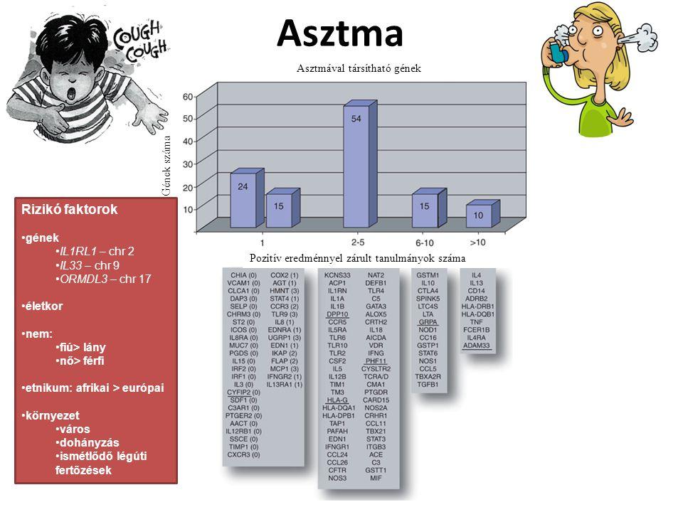 Pozitív eredménnyel zárult tanulmányok száma Asztmával társítható gének Gének száma Rizikó faktorok gének IL1RL1 – chr 2 IL33 – chr 9 ORMDL3 – chr 17