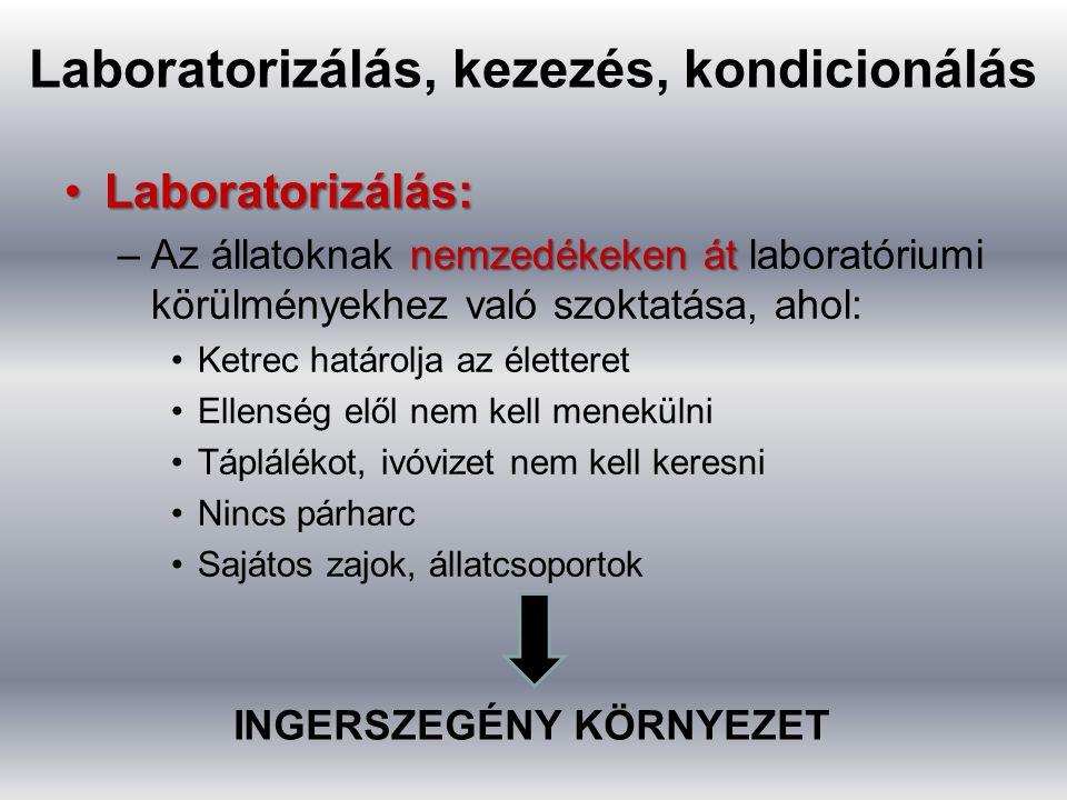 Laboratorizálás, kezezés, kondicionálás Laboratorizálás:Laboratorizálás: nemzedékeken át –Az állatoknak nemzedékeken át laboratóriumi körülményekhez v