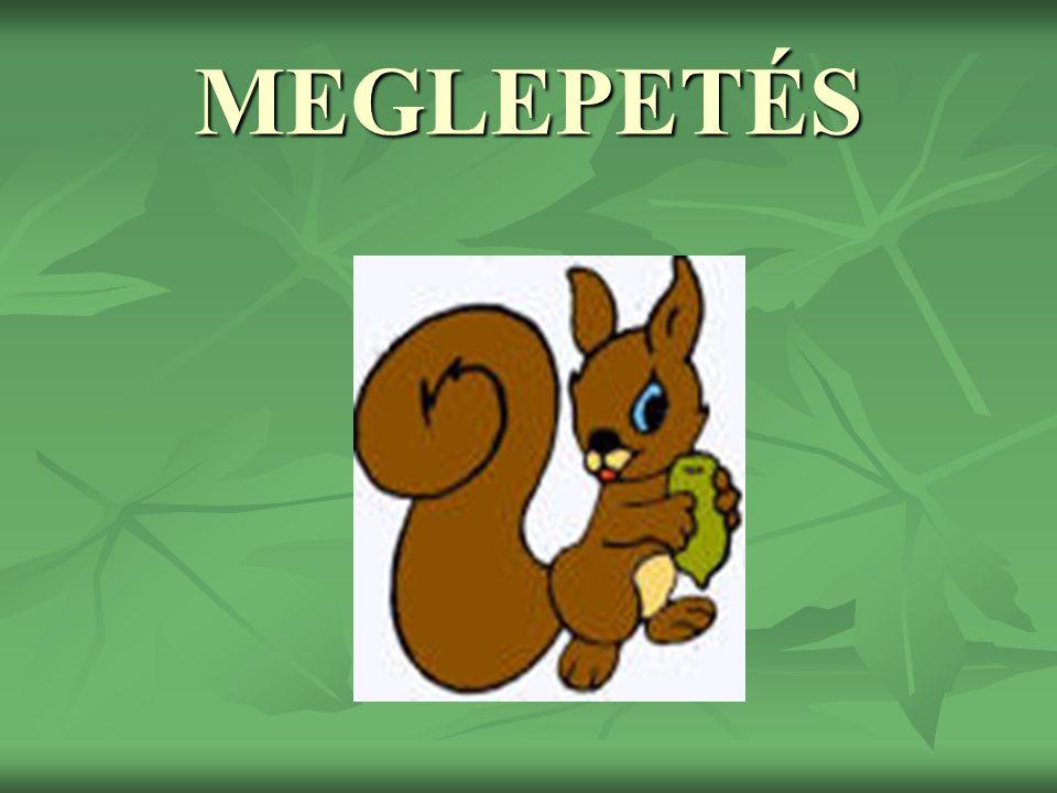 MEGLEPETÉS