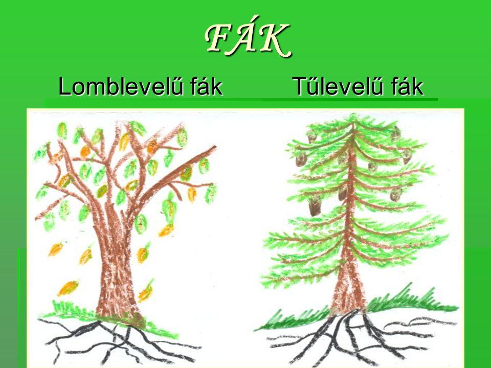 Lomblevelű fák Hársfa, gesztenyefa, nyírfa, topolyfa, bükkfa, tölgyfa, fűzfa